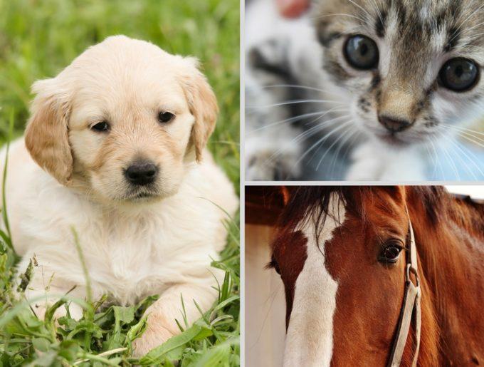 Můžu homeopatika používat i pro zvířátka?