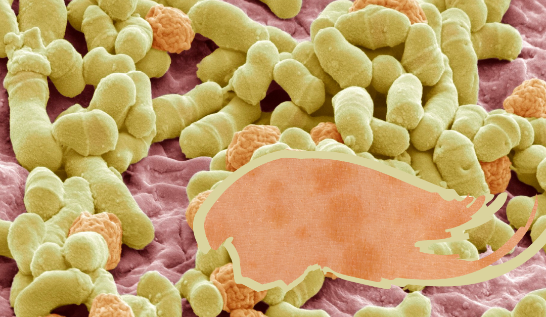 Pityriasis versicolor a Schüsslerovy soli